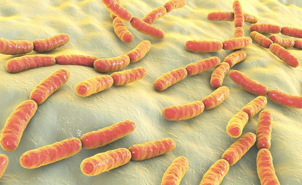 Wpływ bakterii jelitowych na samopoczucie i stres