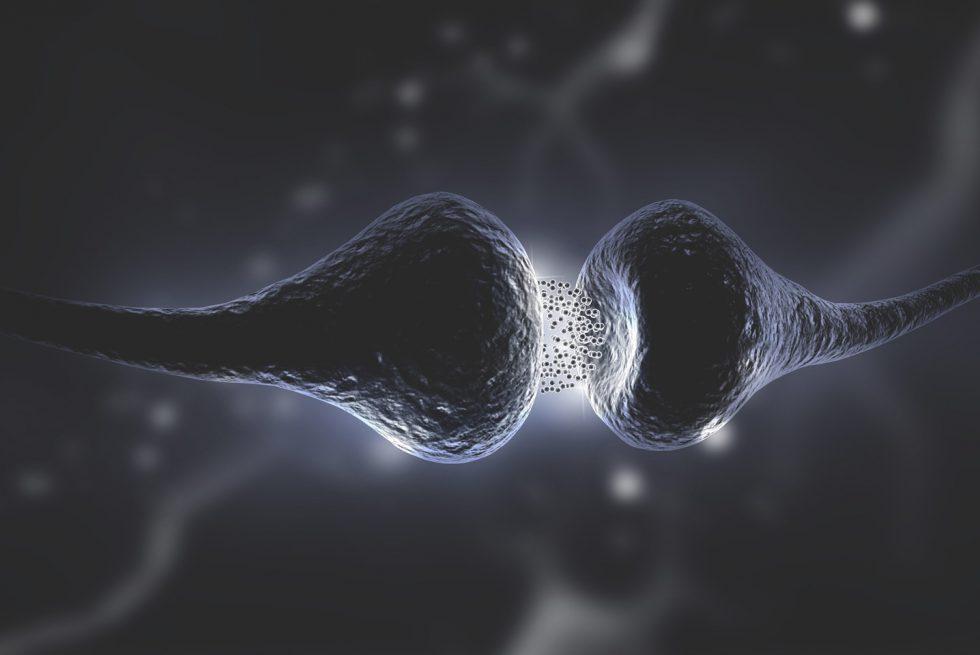 Jak naturalnie podnieśc poziom serotoniny w neuronach?