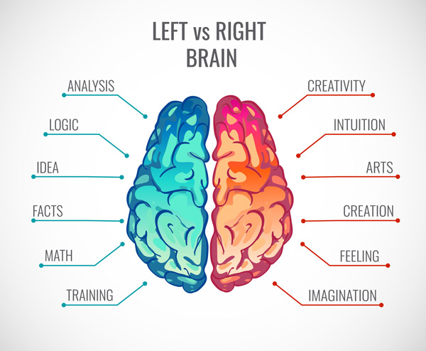 Lewa i prawa półkula mózgu